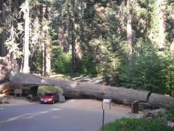 MaP_US Roadtrip_29