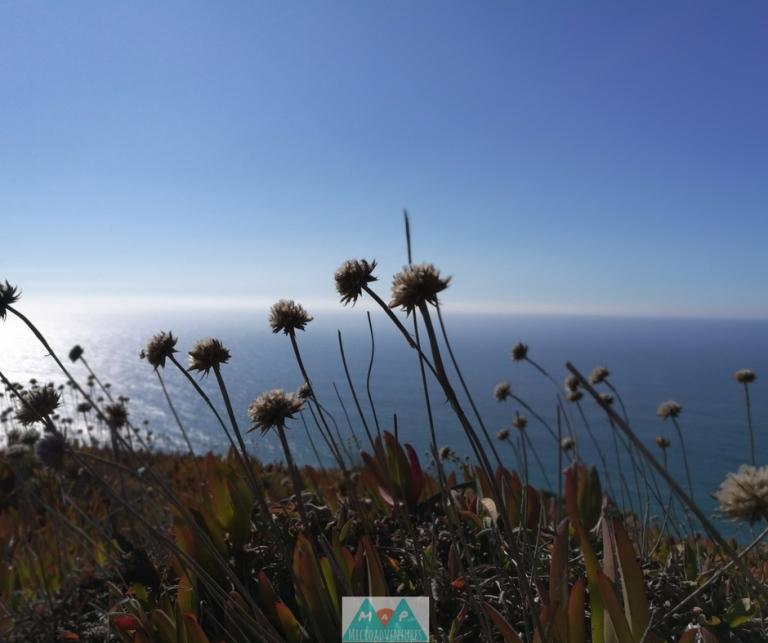 MaP_Praia da Ursa_5