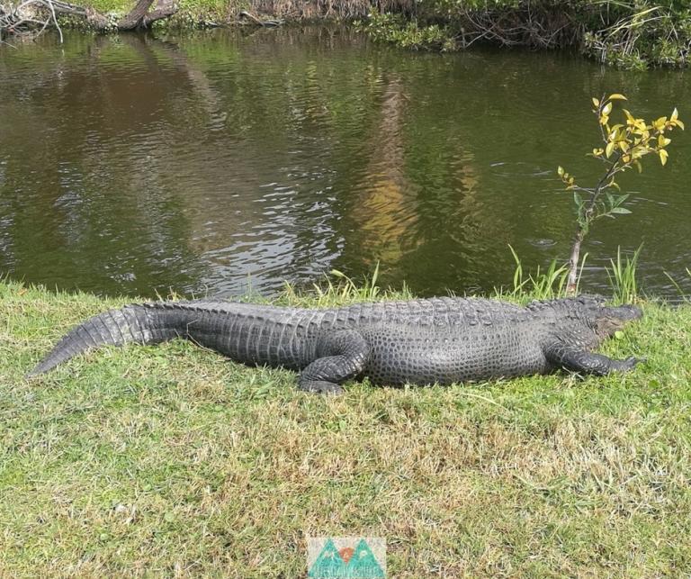 MaP_Florida_5