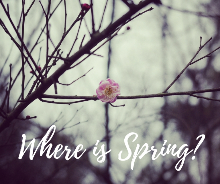 MaP_Where is Spring_1
