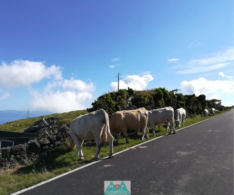 MaP_Açores_7